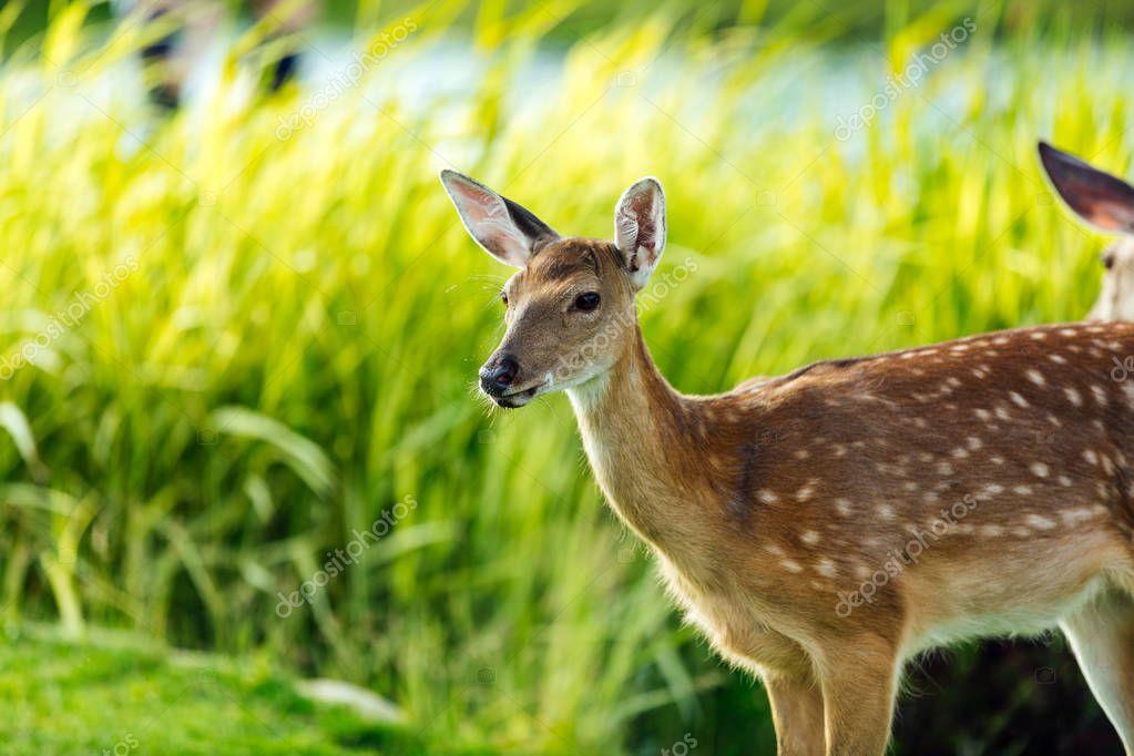 beautiful deer in park