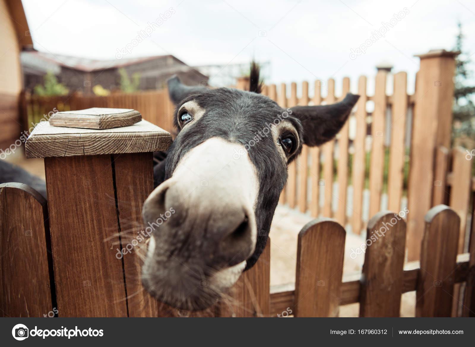 Donkey — Stock Photo, Image