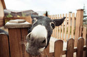 Photo donkey
