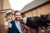 Photo family feeding donkey in zoo