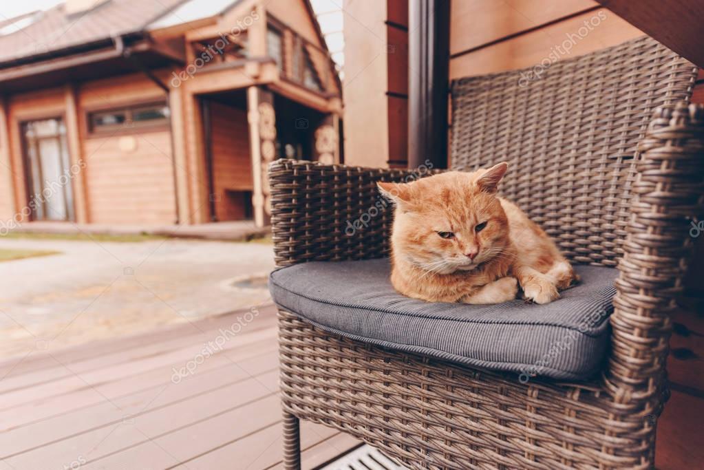 sleepy cat lying on chair