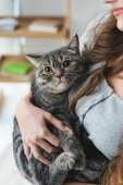 cropped shot of young woman holding adorable tabby cat in hands