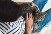 Fotografie top view of young man petting cute tabby cat