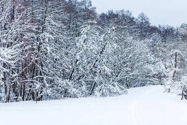 scenic view of winter forest and trees covered with snow