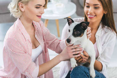 attractive girls with jack russell terrier dog at home