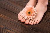 oříznutý pohled nohou s přírodní pedikúra a květ gerbery na dřevěný povrch
