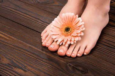 cropped view of feet with natural pedicure and gerbera flower on wooden surface