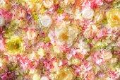 Fényképek gyönyörű virágos háttér elegáns kis virágot