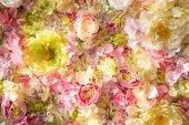 Fényképek gyönyörű virágos háttér pályázati virágokkal