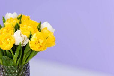 8 march celebration bouquet of tender spring tulip flowers in vase on violet