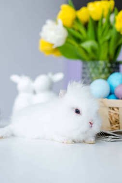 Cute rabbit by painted Easter eggs on table