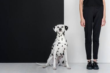 cropped image of stylish woman in black clothes standing near black and white wall with dalmatian dog