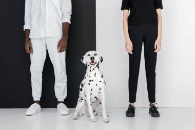 cropped image of african american boyfriend and girlfriend standing with dalmatian dog near black and white wall
