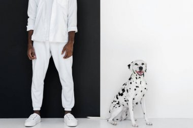 cropped image of stylish african american man in white clothes with dalmatian dog near black and white wall