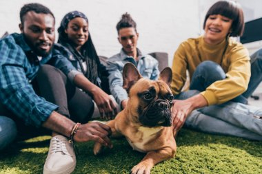 closeup shot of french bulldog and group of multicultural friends