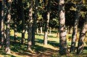 Fotografie stromy v podzimním lese