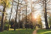 stromy v podzimním parku