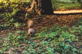 Photo squirrel in forest