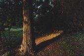 stromy v podzimním lese