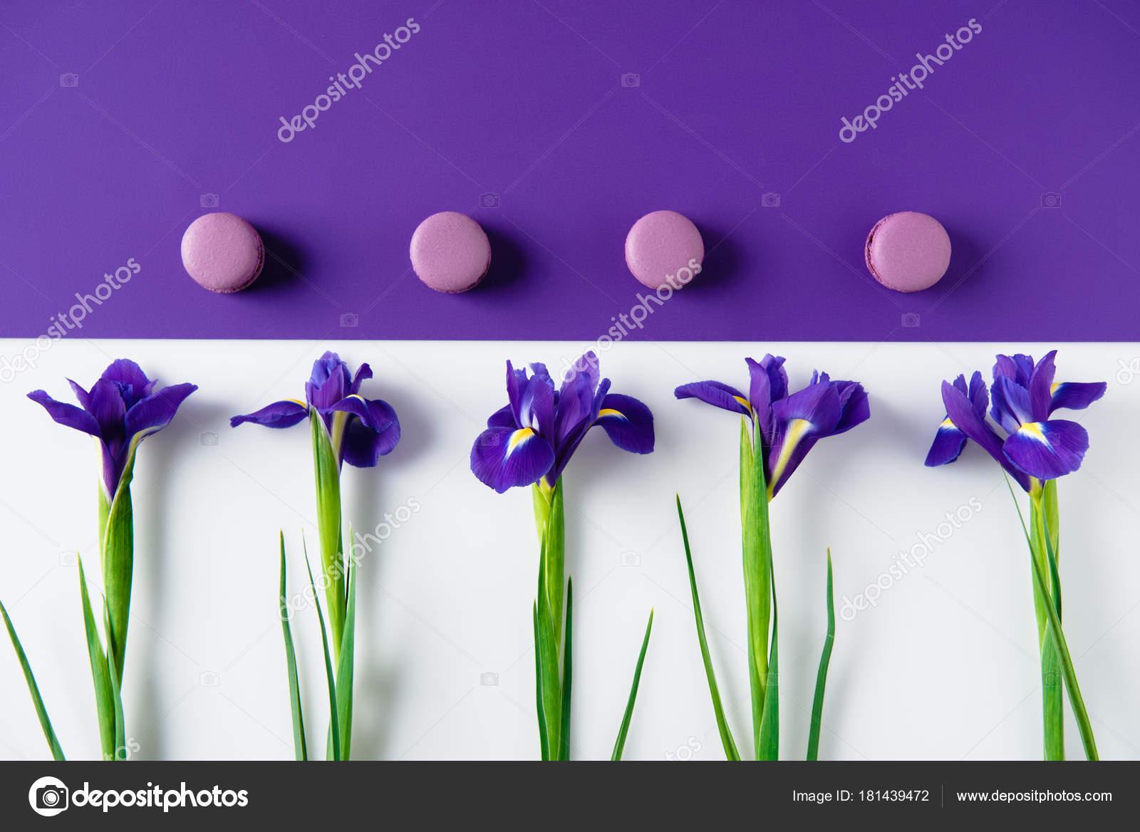 Top View Iris Flowers Macaron Cookies Purple White Surface Stock