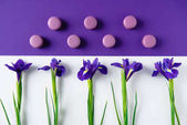 Fotografie flat lay composition of iris flowers with delicious macaron cookies on purple and white surface