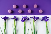 flat lay composition of iris flowers with delicious macaron cookies on purple and white surface