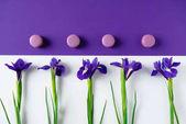 Fotografia vista superiore dei fiori delliride con macaron biscotti sulla superficie viola e bianca
