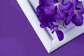 pohled shora květy orchidejí na bílý rámeček na fialovou povrchu