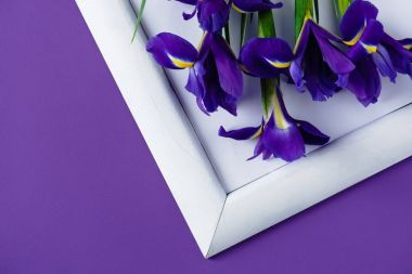 top view of iris flowers on white frame on purple surface