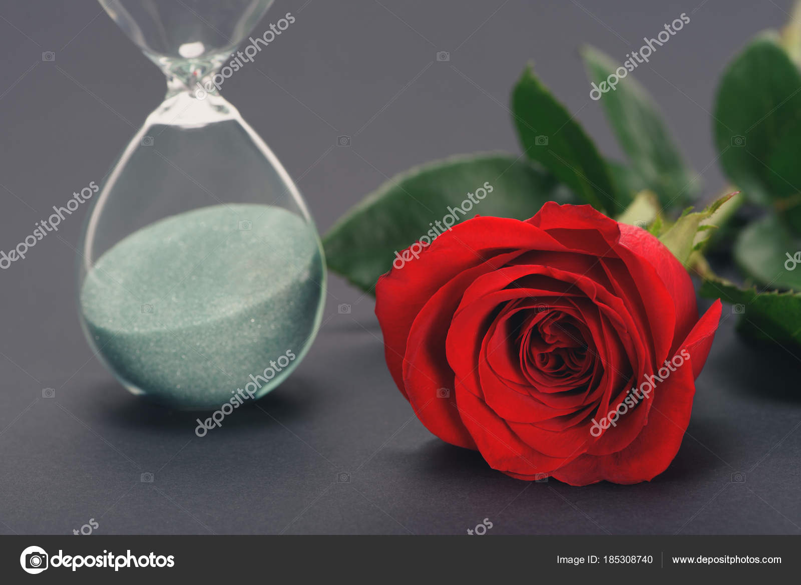 Close View Beautiful Red Rose Flower Hourglass Grey Stock Photo