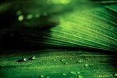 Detailní pohled zelené přirozeného pozadí rosou kapky