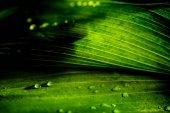 Fotografie Detailní pohled na zelené květinové pozadí s deštěm kapek