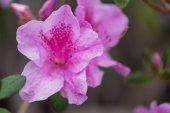 Detailní pohled krásné čerstvé kvetoucí fialovými květy
