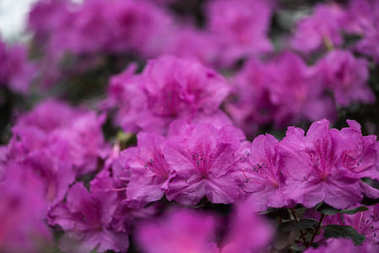 close-up view of beautiful small blooming purple flowers
