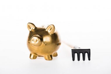close-up view of golden piggy bank and small rakes isolated on white