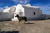 sunlight on brown horse walking near white building in santorini