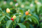 Photo selective focus of wild berries near green leaves
