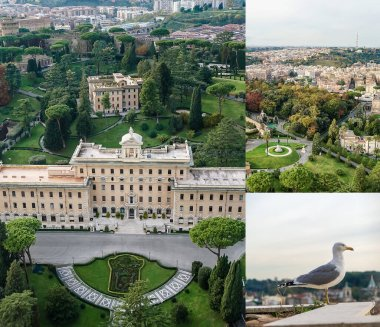 Collage of gardens in Vatican city near historical buildings and wild gull in italy stock vector