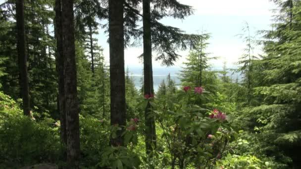 gyönyörű kilátás nyílik az olimpiai hegység washington erdő