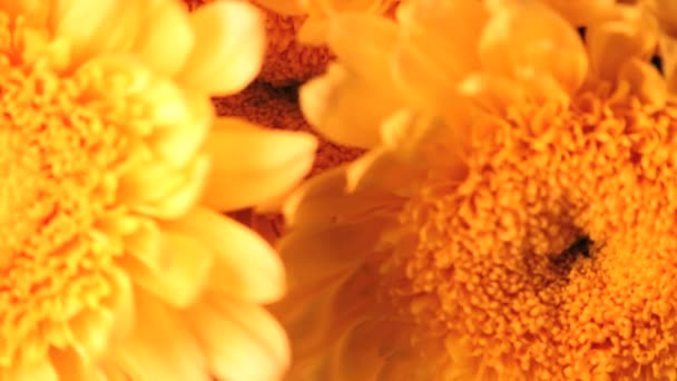 velké žluté květy zblízka předení
