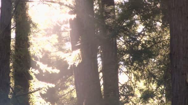 chyby a slunce v lese