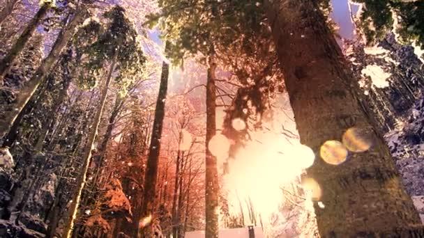 barevné sluneční erupce slunce sníh zimní lesní stromy