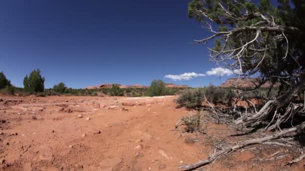 pouštní krajina na strom dolly