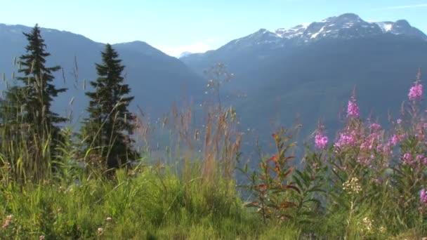 květiny v malebném horském úpatí