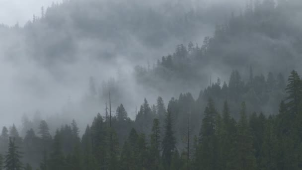 foggy forest mountainside