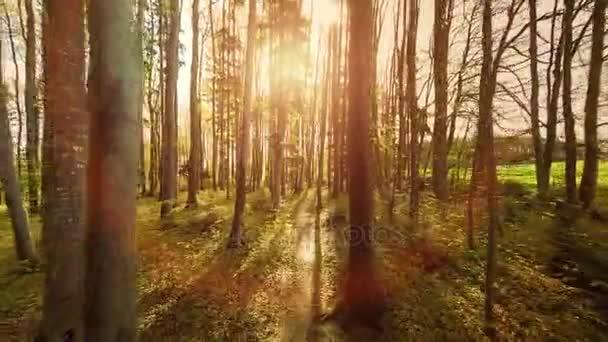 lesní stromy lesní stromy rostliny přírodní pozadí letní letecký pohled