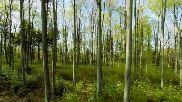 green forest trees woods plants nature background summertime aerial view