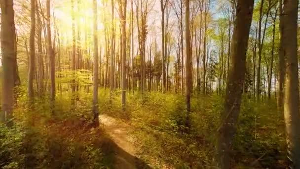 listy zelené stromy přírody lesů lesy
