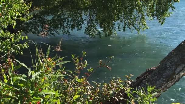 vysoká bush brusinky tekoucí řeky