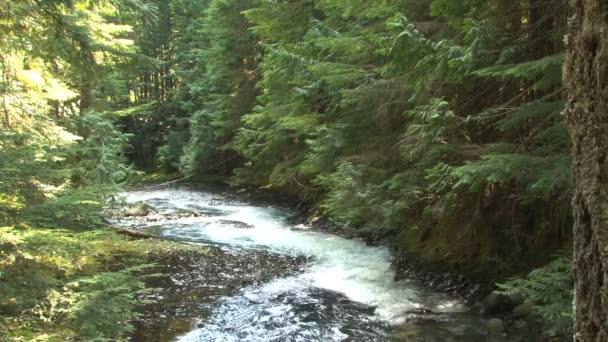 odloučené lesní potok